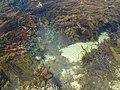 250 Ocean Beach Rd, Sorrento VIC 3943, Australia - panoramio (1).jpg