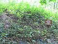 32 Lewiston Mound 5.JPG