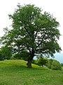 39040 Montan, Province of Bolzano - South Tyrol, Italy - panoramio.jpg