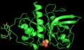 3D structure of zingibain enzyme.png