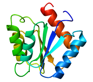 Flavodoxin fold - Ribbon diagram of CheY (a regulator of the chemotactic response in bacteria, PDB accession code 3CHY), which adopts the flavodoxin fold.  Ribbon is colored from blue (N-terminus) to red (C-terminus).