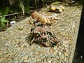 4217Foods Common houseflies Ants of the Philippines 14.jpg