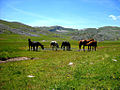 A02 Mavrovo - Horses on a tiny lake.jpg