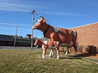 Anderson Erickson Dairy Dairy in Iowa