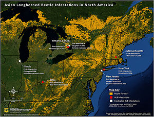 Asian long-horned beetle - First detections of Asian long-horned beetle in North America as of July 2, 2015.