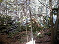AUT 2562 ForestWander.JPG