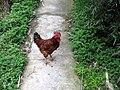 A Chick.JPG