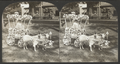 A Fairy Turnout, Floral Parade, Saratoga, N.Y, from Robert N. Dennis collection of stereoscopic views.png