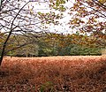 A curtain of autumnal leaves - geograph.org.uk - 1029797.jpg