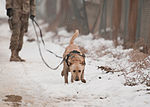 A dog's life, Mine dogs train to save lives 130108-A-GH622-108.jpg