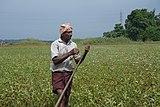 A farmer in Kerala 03.jpg