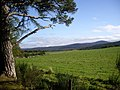 A field behind Finzean Community Woods - geograph.org.uk - 1491613.jpg