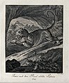 A lioness leaping off a rock in an exotic landscape. Etching Wellcome V0021051EL.jpg