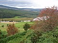 A tree within the gorse - geograph.org.uk - 1454606.jpg