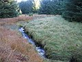 A tributary of Carmacoup Burn - geograph.org.uk - 597139.jpg