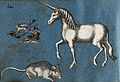 A unicorn, a squirrel and a mouse. Wellcome V0021378.jpg