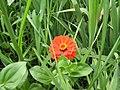 Ab plant 958.jpg