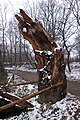 Abgebrochene mehrhundertjährige Eiche am Ufer des Scheuermühlenteichs, Köln Wahnheide.jpg