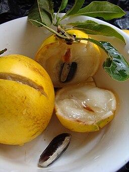 caimito: fruta amazónica