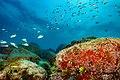 Abrolhos Marine National ParkRobertoCostaPinto23.jpg