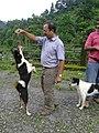 Acrobatic Canine.jpg