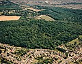 Aerial view of Hadleigh Great Wood (Belfairs Nature reserve) - geograph.org.uk - 1770279.jpg