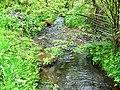 Afon Gronw, Coed Howell - geograph.org.uk - 1319329.jpg