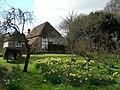 Alfriston Clergy House Garden - Daffodils - panoramio.jpg
