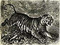 All about animals. Facts, stories and anecdotes (1900) (14774689221).jpg