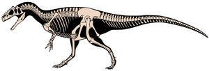 Allosaurus jimmadseni skeletal.png