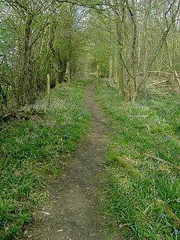 Along Greensands Ridge Walk - geograph.org.uk - 400458