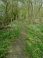 Along Greensands Ridge Walk - geograph.org.uk - 400458.jpg