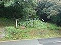 Amazing Agapanthus - geograph.org.uk - 929112.jpg