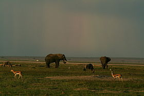Image illustrative de l'article Parc national d'Amboseli