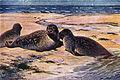 Americana 1920 Seals and Sealing - harbor seal.jpg