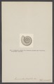 Ammonites plicatilis - - Print - Iconographia Zoologica - Special Collections University of Amsterdam - UBAINV0274 005 10 0014.tif