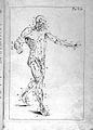 Anatomia esterna del corpo umano, title page. Wellcome L0023847.jpg