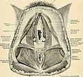 Anatomy, descriptive and applied (1913) (18168912326).jpg