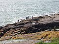 Anglers on rocks near Red Head, Dunmore east - geograph.org.uk - 1476478.jpg