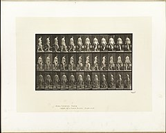 Animal locomotion. Plate 106 (Boston Public Library).jpg