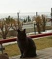 Ankara, Turkey - panoramio (20).jpg