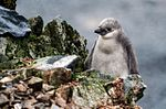 Antarctic Majesty (24313673483).jpg