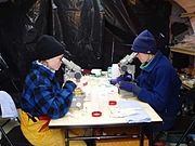 Two researchers studying plankton through microscopes.