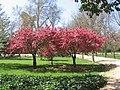 Arboles floridos - panoramio.jpg