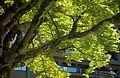 Arima Onsen 有馬溫泉 (KANAZAWA-HYOGO-JAPAN) (4950781681).jpg