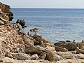 Artà, Balearic Islands, Spain - panoramio (4).jpg