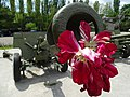 Artillery Piece with Memorial Flowers - Battery 411 Memorial - Odessa - Ukraine (26957127105).jpg
