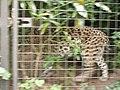 Artis, Zoo, Dierentuin - panoramio (55).jpg