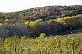 Asbury - Park Farm Winery 2.jpg