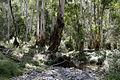 Australian bush.jpg